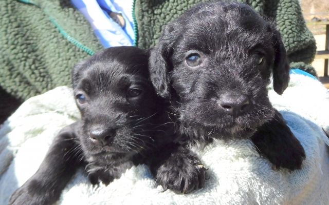 Clay Hall Kennels Puppies With Love And Care Puppies